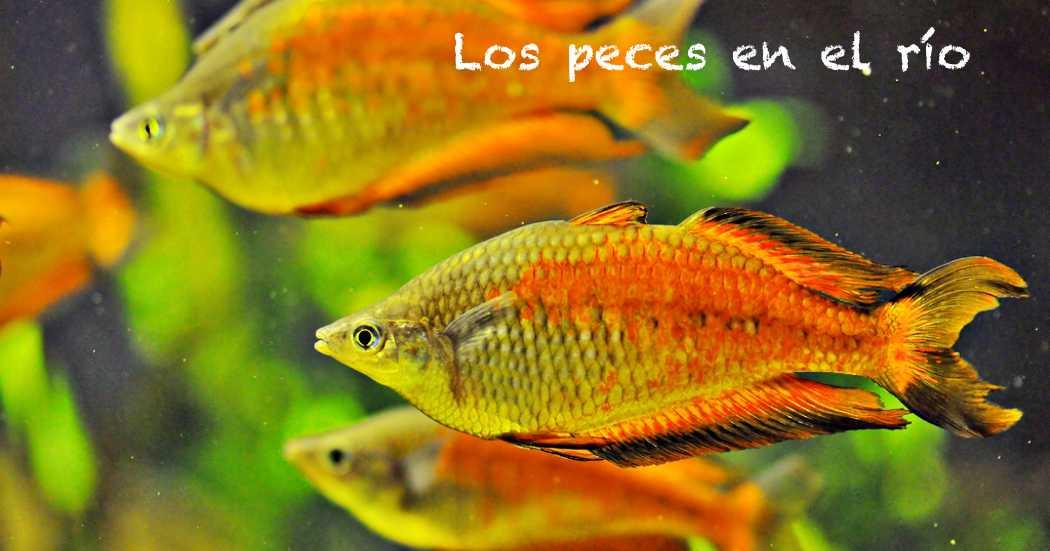 Peces En El Rio